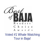 Best of Baja Reader's choice award